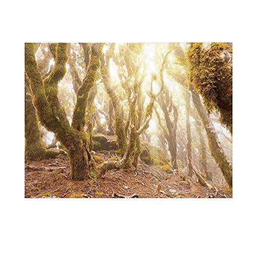 Rainforest Decorations Photography Background,Morning Sun Rays Mist in Virgin Mountain Forest Moss on Trees Natural Paradise Backdrop for Studio,15x10ft