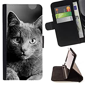 Jordan Colourful Shop - British Shorthair For Samsung Galaxy S5 Mini, SM-G800 - Leather Case Absorci???¡¯???€????€?????????