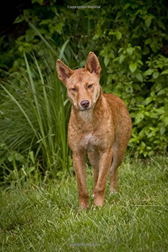 Read Online Dingo Wild Dog Journal: 150 Page Lined Notebook/Diary PDF