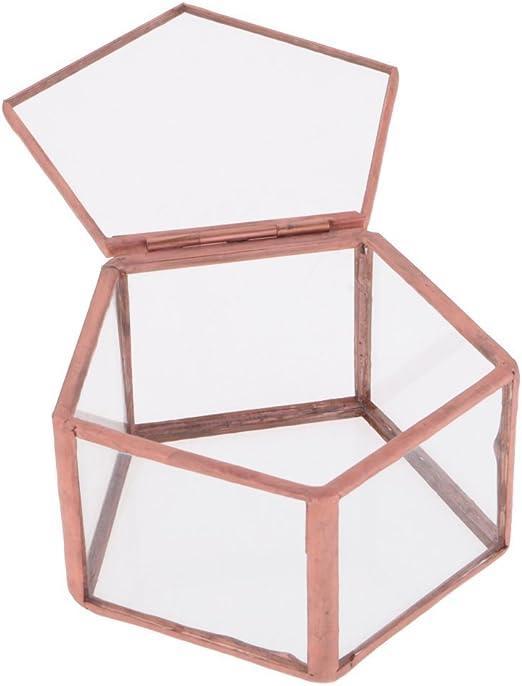 Geometría de cristal Terrario Pentágono Caja Joyero Cristal Suculenta Plantas – Maceta decorativa mesa Suculenta musgo: Amazon.es: Jardín