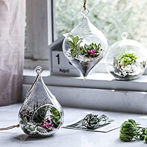 Whole Housewares Glass Hanging Terrarium Set Of 3 In Large Size Succulentmossair Plant Terrarium 3 Pack In Different Shape