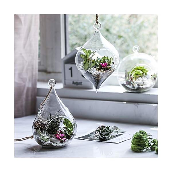 Whole Housewares Glass Hanging Terrarium Set Of 3 In Large Size Succulentmossair Plant Terrarium 3 Pack In Different Shape