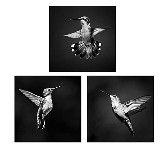 Bird wall art set of 3 black and white photography prints hummingbird decor