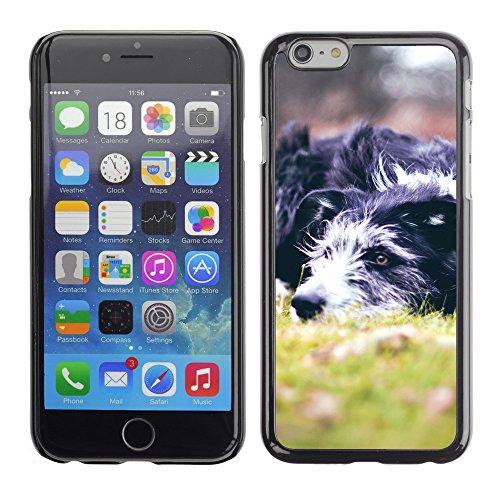 "Premio Sottile Slim Cassa Custodia Case Cover Shell // V00003705 animaux 5 // Apple iPhone 6 6S 6G 4.7"""
