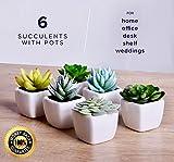 echt Home Artificial Succulent Fake Plants For Decoration Living Room, Desk, Office, Shelf Decor Set of 6 Plants in Pots