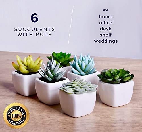 echt Home Artificial Succulent Fake Plants For Decoration Living Room, Desk, Office, Shelf Decor Set of 6 Plants in Pots