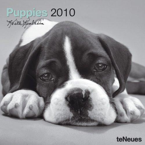 2010 Puppies Wall Calendar