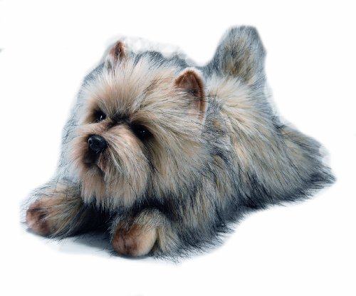 Toy Cairn Terrier - Yomiko Yomiko Cairn Terrier by Russ