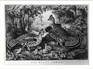 Historic Print (M): The happy family: ruffed grouse and young