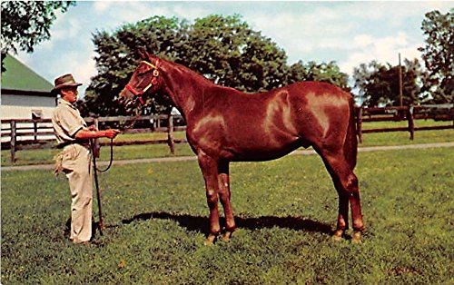 Yearling Ready for sale Lexington, Kentucky, KY, USA Old Vintage Horse Racing Postcard Post Card