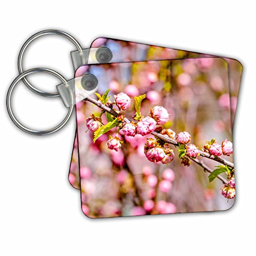 Flower Plum Branch (Alexis Photography - Flowers Sakura - Branch of flowering plum tree with flowers - Key Chains - set of 2 Key Chains (kc_271526_1))