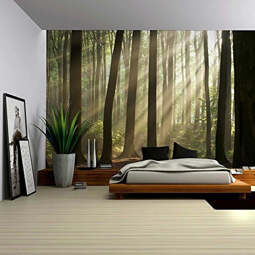 Landscape Mural of the Sun Peaking Through The Trees in a Forest Wall Mural