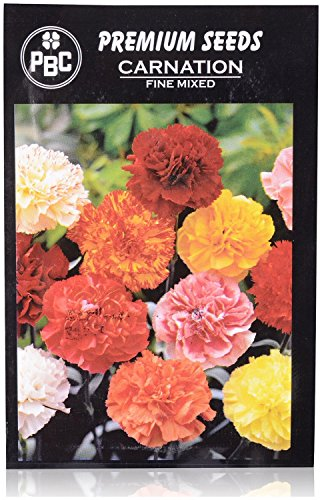 PBC Carnation Fine Mixed Premium Seeds (Pack of 100 Seeds) - Exotic variety from INDIA (India Carnation)