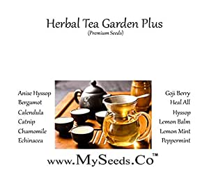 MySeeds.Co HERBAL TEA Garden Plus Seeds Kit - (12 Easy-to-Grow Herbs) From Anise Hyssop to Peppermint (HERBAL TEA Garden Plus Seeds Kit)