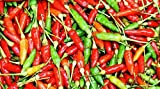 Philippine Bureau of Plant Industry Sili Siling Labuyo Hot Pepper Seeds