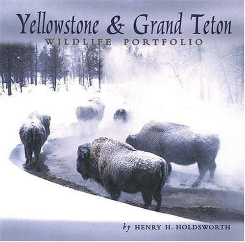 Yellowstone & Grand Teton Wildlife Portfolio -