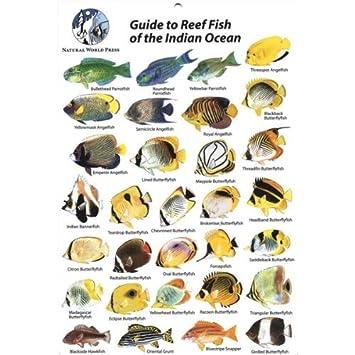 fish id card indian ocean maldives etc amazon co uk sports outdoors