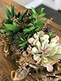 Faux Succulent Arrangement in Natural Driftwood Container