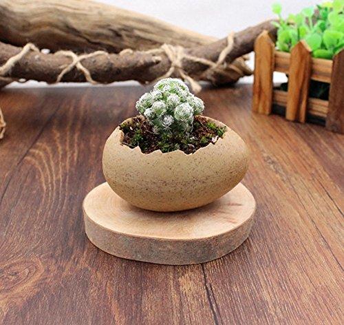 - YOURNELO Ceramic Emulational Egg Plant Flower Pot Succulent Planters Vase (Egg A)