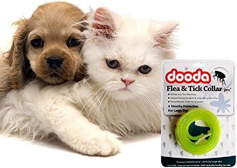 Pulgas Tick anti perro gato repeler pulgas protección mascota contra collar también para personas