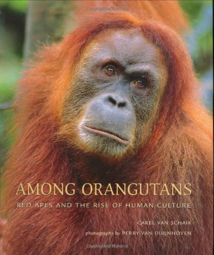 (Among Orangutans: Red Apes and the Rise of Human Culture)