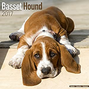 Basset hound calendar 2017 dog breed calendars 2016 2017 wall basset hound calendar 2017 dog breed calendars 2016 2017 wall calendars 16 month by avonside fandeluxe Image collections