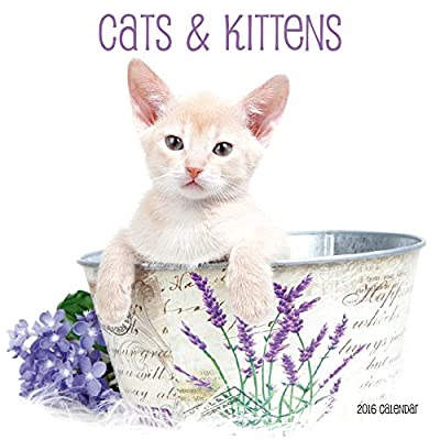 Cats (CL53517)