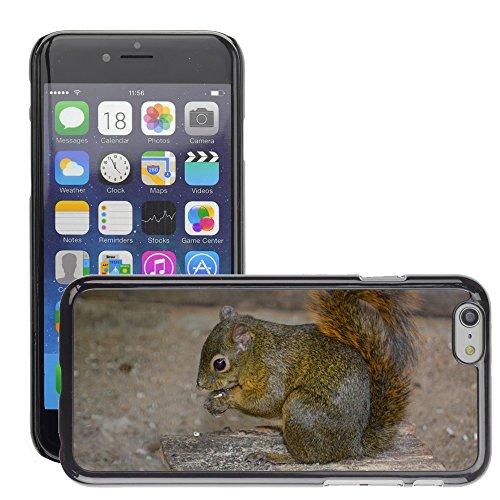 """Just Phone Cases Hard plastica indietro Case Custodie Cover pelle protettiva Per // M00129114 Squirrel Nut Croissant Nibble Manger // Apple iPhone 6 PLUS 5.5"""""""