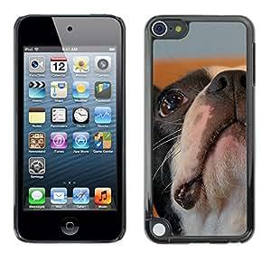 Vortex Accessory Carcasa Protectora Para Apple Ipod Touch 5 - Boston Bulldog Terrier French Dog Bull -