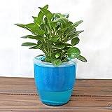 Cheap Mkono 3 Pack Self Watering Planter Plastic Flower Pot, Blue