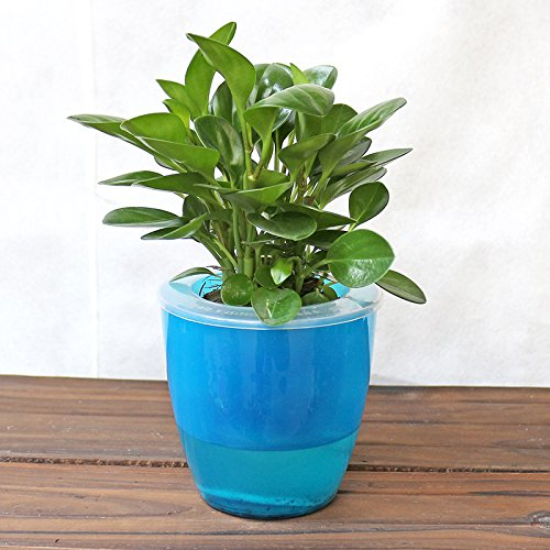 Mkono 3 Pack Self Watering Planter Plastic Flower Pot, Blue (Planter Blue Plastic)