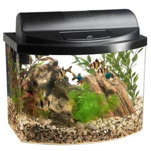 Aqueon 17774 Mini Bow 5 Gallon Desktop Aquarium Kit, Black by Aqueon