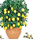 Seeds Market Rare Lemon, 20 seeds, balcony patio potted fruit trees planted seeds