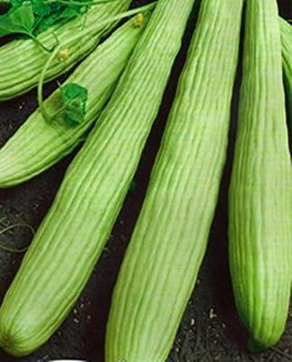 Seeds Armenian Cucumber Belyy Organically Grown Russian Heirloom