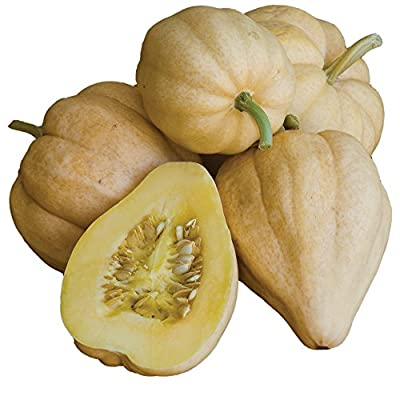 Burpee Thelma Sander's Sweet Potato Winter Squash Seeds 15 seeds