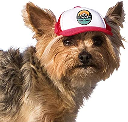 Doggy Pill Box Hats pick a style Hats for dogs Dog hat
