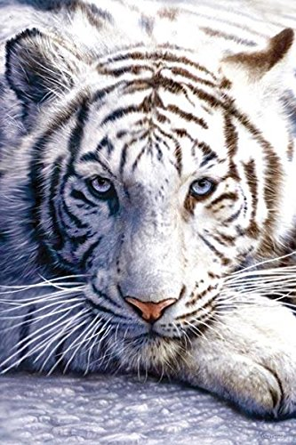White Tiger Poster 24x36 inch