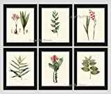 perfect patio wall design ideas Botanical Set of 6 Prints Antique Redoute Beautiful Pink Red Flowers Gladiolus Bulb Leaf Green Garden Nature Home Room Decor Wall Art Unframed