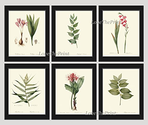 Botanical Set of 6 Prints Antique Redoute Beautiful Pink Red Flowers Gladiolus Bulb Leaf Green Garden Nature Home Room Decor Wall Art Unframed (Outside Dining Ideas)
