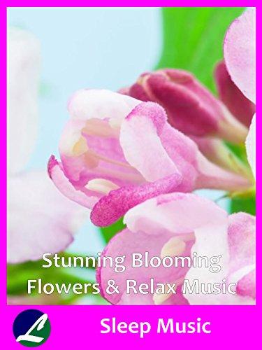 Stunning Blooming Flowers & Relax Music - Sleep Music -