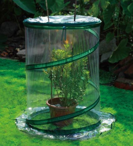 Zenport SH3240-10PK Pop-Up Greenhouse Protects Shrubs Small44 Box of 10