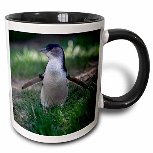 - 3dRose 91531_4 Omaha, Henry Dourly Zoo Little Blue Penguin-Us26 Gha0030-Gayle Harper Two Tone Black Mug, 11 oz, White
