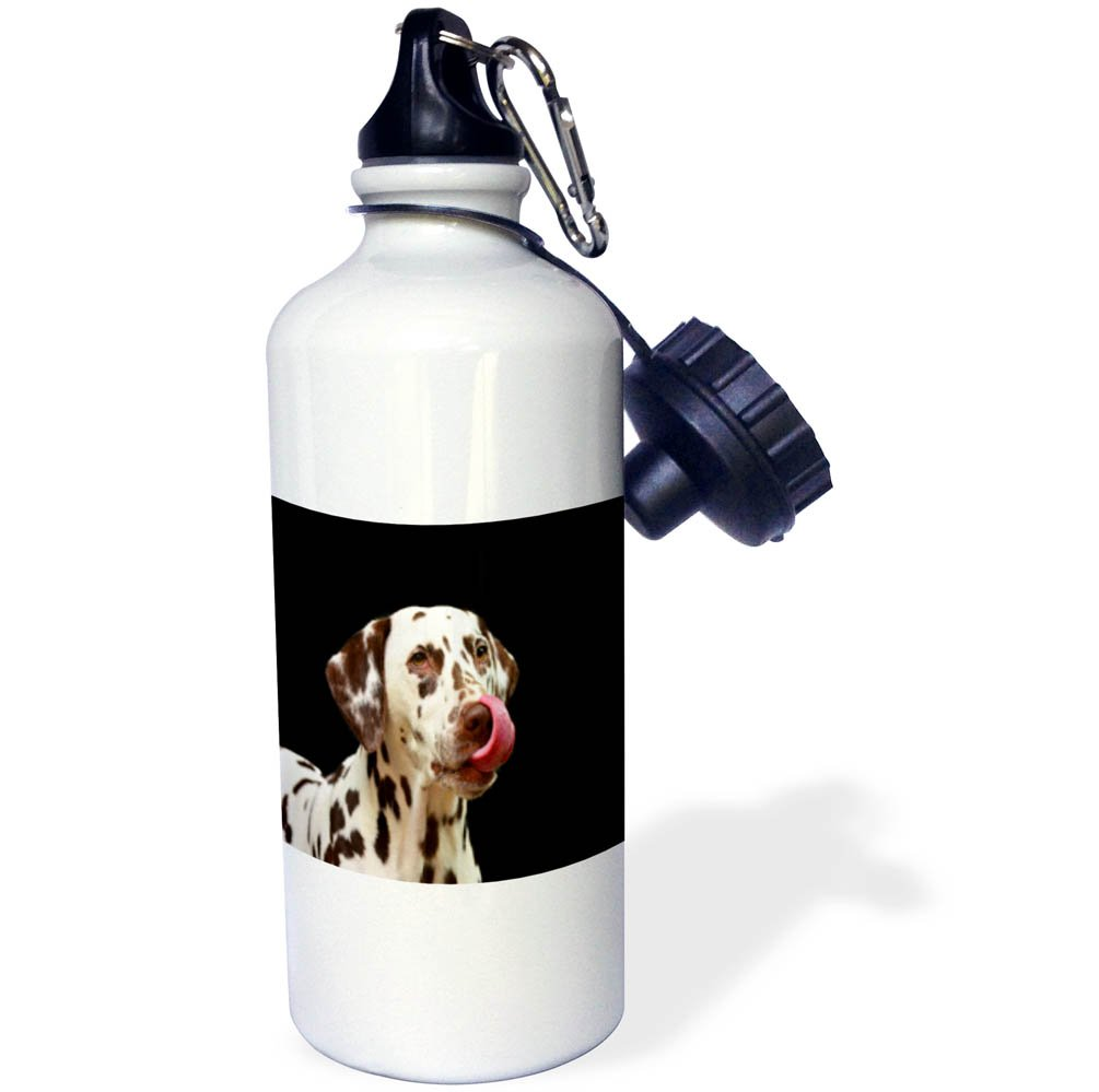 3dRose wb/_255372/_2 Image of Dachshund Puppy Portrait Straw Water Bottle