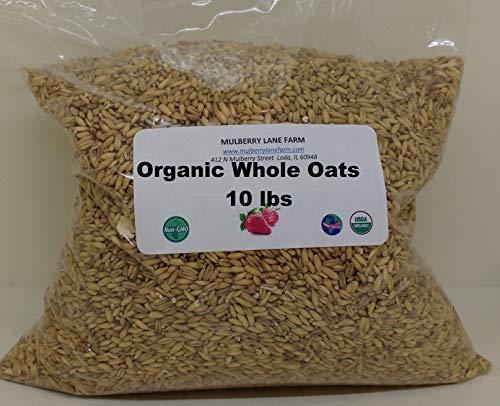 Whole Oats 10 Pounds Groats, Hulled, USDA Certified Organic, Non-GMO, Bulk
