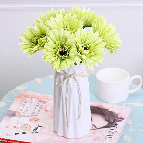 gerbera daisy bush - 8
