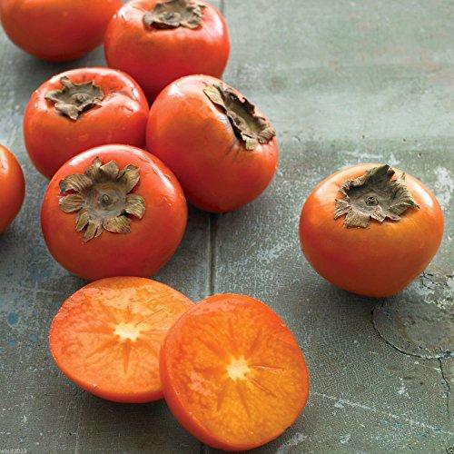 (30 American Persimmon, Diospyros virginiana Seeds A.K.a Common Persimmon,)