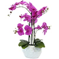 Decoline Kunstpflanze Orchidee XL mit Keramiktopf - ca. 53cm hoch