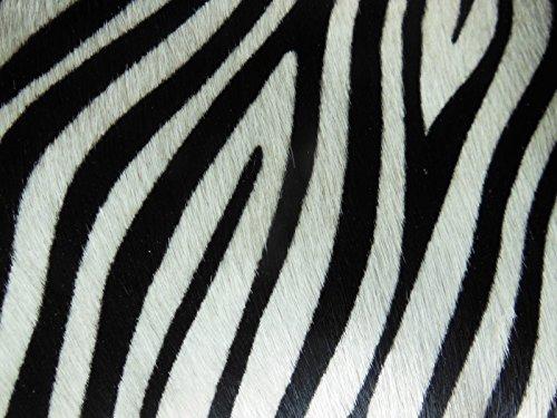 Conducendo Dietro Il Pony Zebra