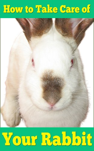 How to Take Care of Your Rabbit | For First Time and Pro Owners of Furry Friends | by [Gellis, H.P.]