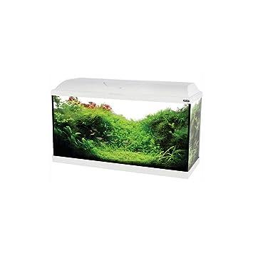 Zolux Acquario Iseo 80 completo 84 litri Nero: Amazon.es: Productos para mascotas